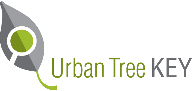 Urban Tree Key