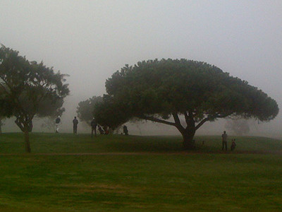 Ecosystem Services  of the Existing and Proposed Trees  of the Palo Alto Municipal Golf Course